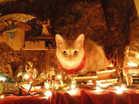 """And the Three Wise Men Brought Gold, Frankincense, and Purr."""