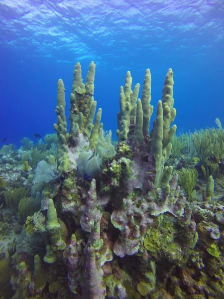 GOPR0728 - Pillar Coral.JPG